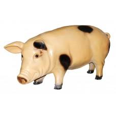 Свинья большая